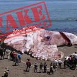 Ανακαλύφθηκε στις ακτές της Καλιφόρνια γιγάντιο καλαμάρι και οι επιστήμονες υποψιάζονται Ραδιενεργό Γιγαντισμό