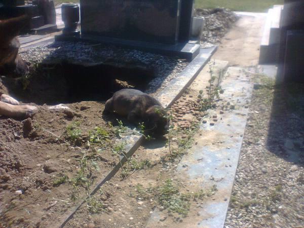 dog-grave-5
