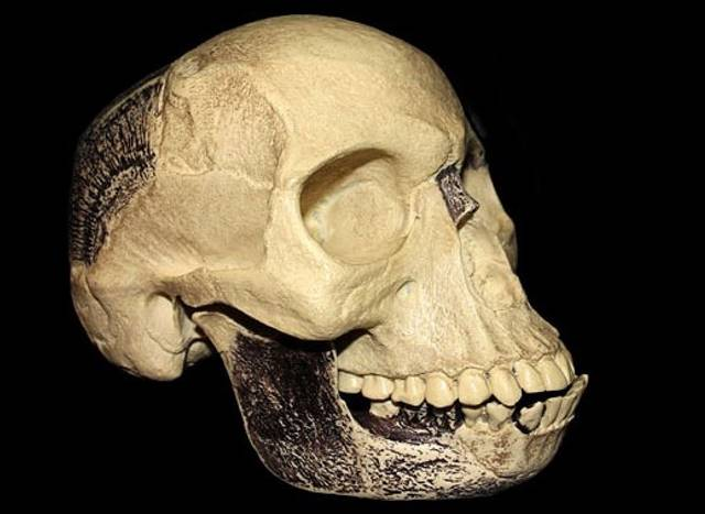 piltdown-man-skull