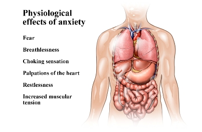 anxiety physiology