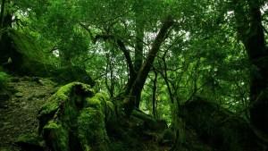 Jungle_Wanderer Part6