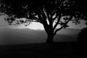 A Dark Tree (wanderer part 4)