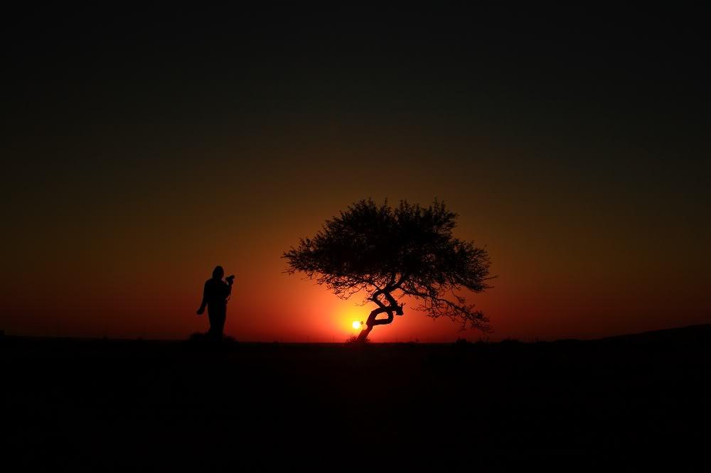desert_wandering