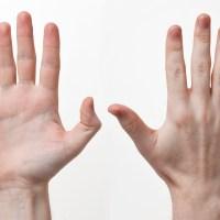 Hand Anatomy, Physiology, and Use