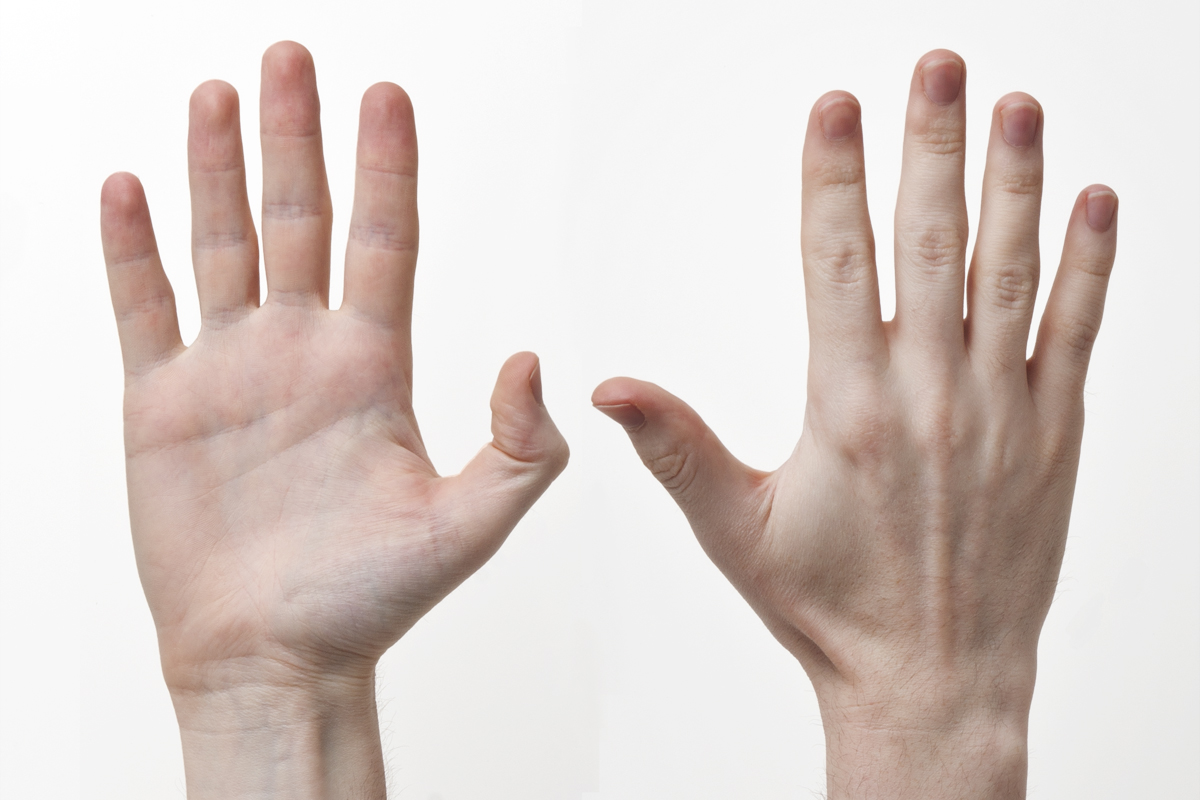 """""""Human-Hands-Front-Back"""" by Evan-Amos - Own work. Licensed under CC BY-SA 3.0 via Wikimedia Commons - http://commons.wikimedia.org/wiki/File:Human-Hands-Front-Back.jpg#/media/File:Human-Hands-Front-Back.jpg"""