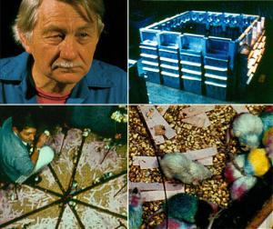 overpopulation: John B Calhoun rat universes