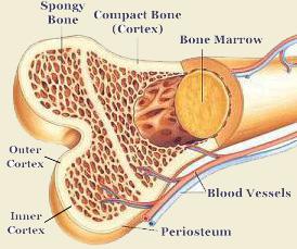bone_layer_image
