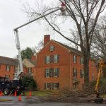 Tree pruning richmond va