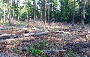 Lot Clearing Tree Service Company Richmond Virginia