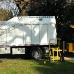 residential tree service richmond va