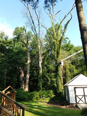 Tree Removal Before and After Richmond Virginia