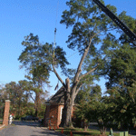Large tree removal with crane R. L. Elliott Enterprises
