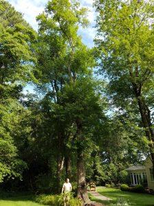 tree removal richmond virginia