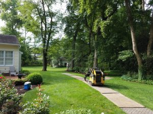 tree removal glen allen virginia