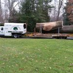 Tree Service company richmond va large tree removal