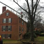 tree pruning rva R. L. elliott enterprises