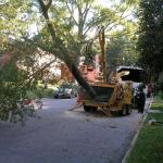 tree service rva chipping whole tree