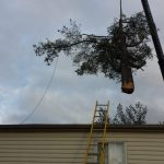 emergency tree removal richmond va R. L. Elliott Enterprises