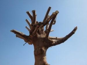 tree topping richmond virginia