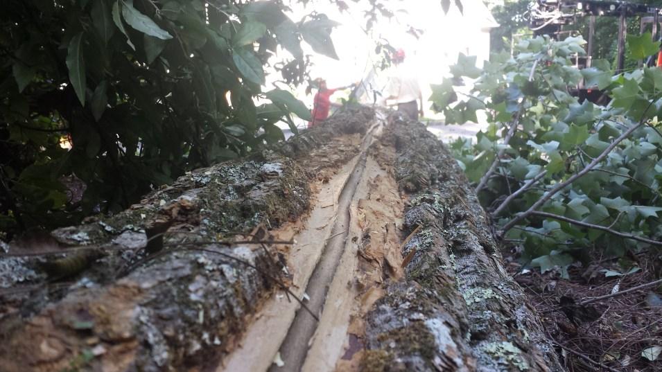 Tree Removal Ashland Va