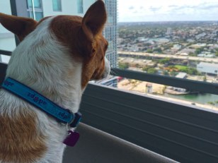 Carmen looking at the Miami skyline