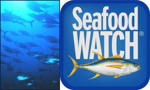 SeafoodWatchimg