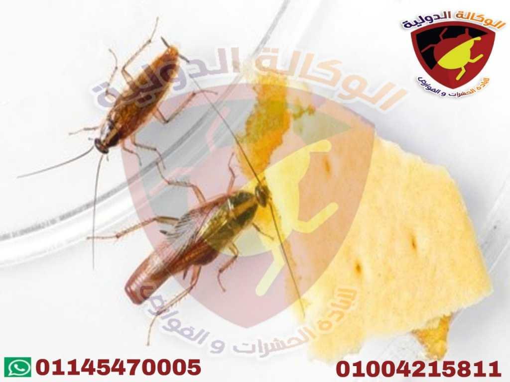 الوكالة الدولية لبحوث الحشرات والقوارض