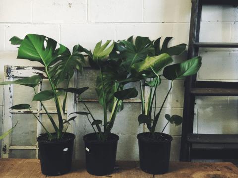 De mooiste kamerplanten anno 2017