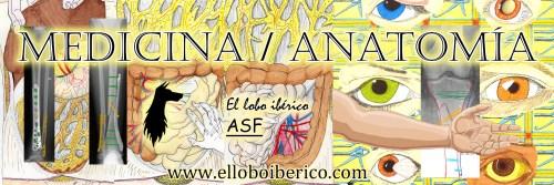 Medicina _ Anatomía