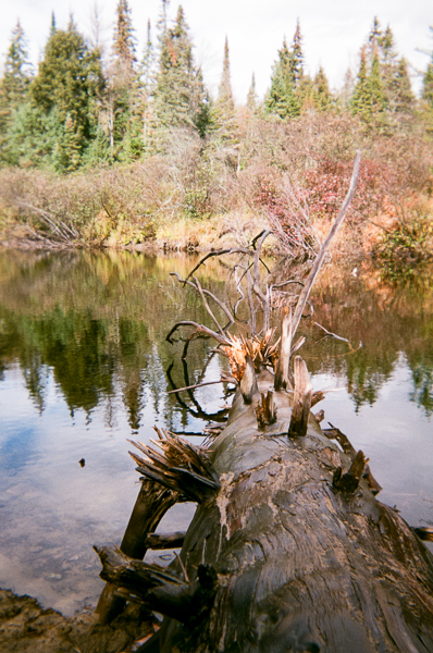 a dead tree in a stream