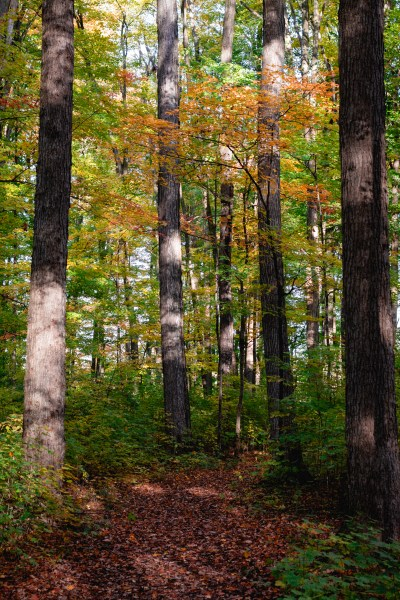 an image of fall foliage