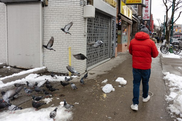 An image of pigeons on the streets of Chinatown in Toronto.