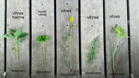 Villan värjäys kasveilla
