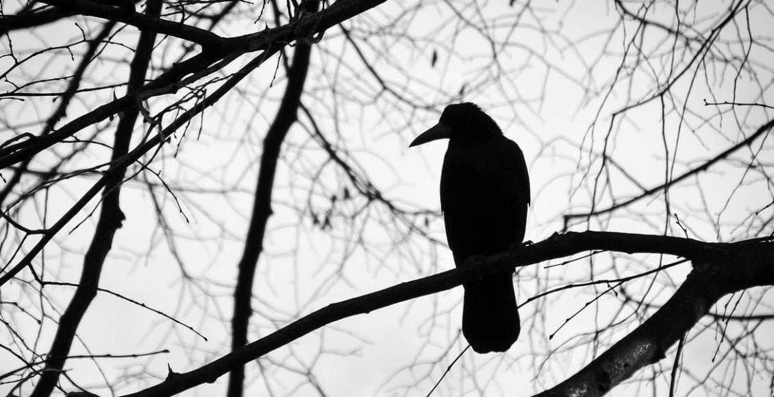الوعي الغربان