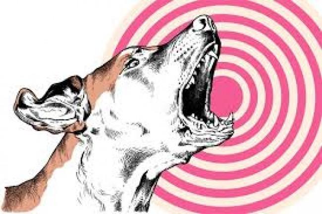 لما بعض الحيوانات السمع لديها أقوى