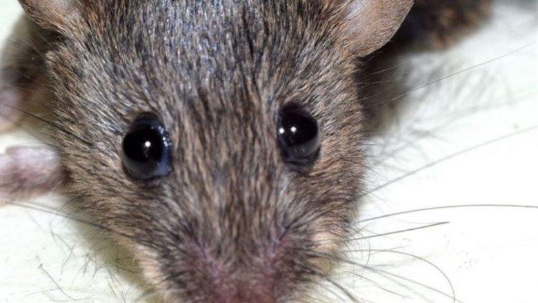 Hantavirus ¿Qué es y cuál es su relación con las ratas?