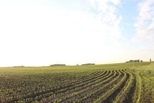 crop in the field