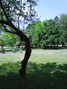 Photo3608
