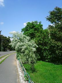 Photo3636