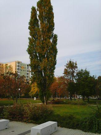 photo5934