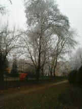 photo6689