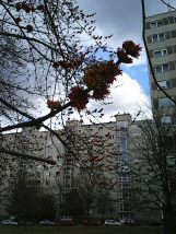 Photo7015