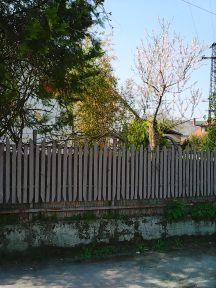 Photo7851