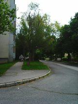 Photo8467