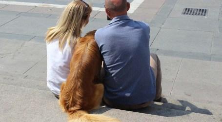Torrent analizará las heces de los perros para sancionar a sus dueños