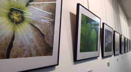 La riquesa floral de Xirivella vista a través d'una exposició