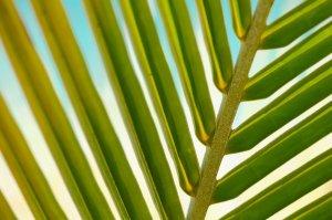 plant, leaf, macro
