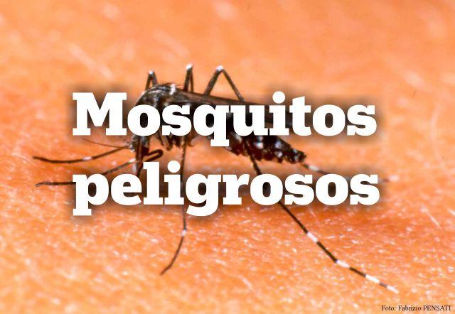 Mosquitos peligrosos