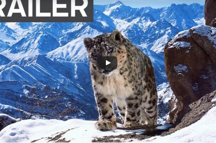 Este video demuestra que el mundo es fascinante 2