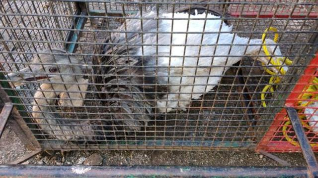 Se encontraron animales silvestres en una vivienda de Unquillo 4